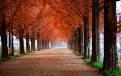 Jesień….